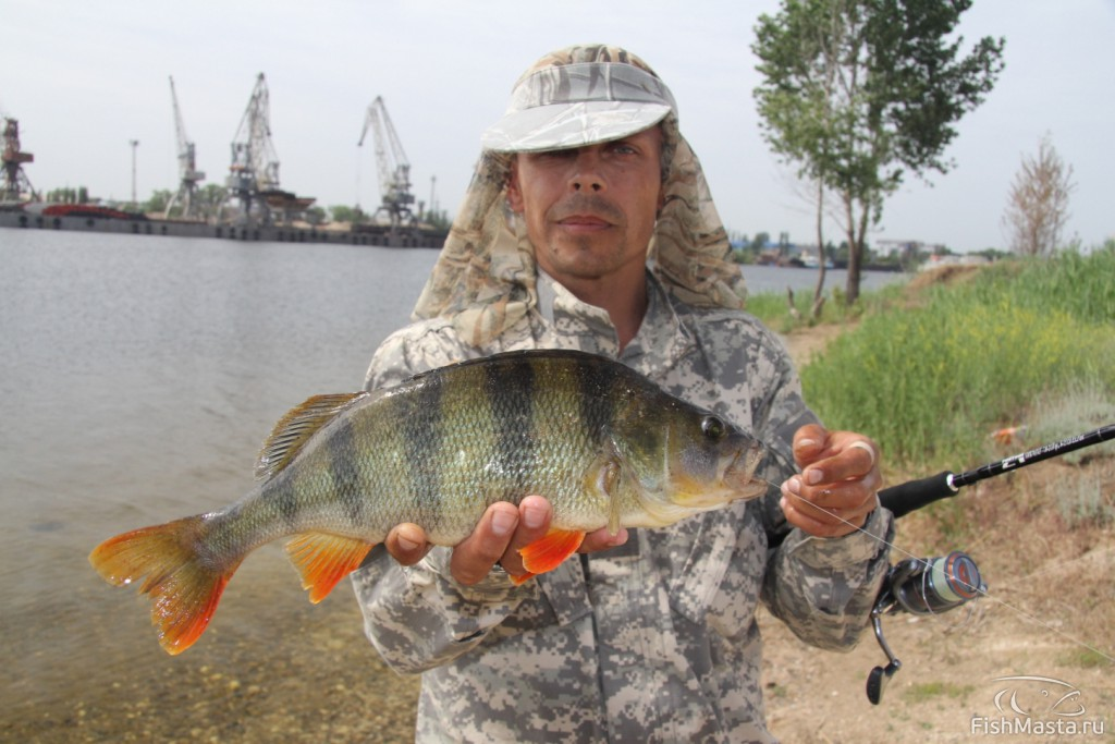 клев рыбы волгоградском водохранилище