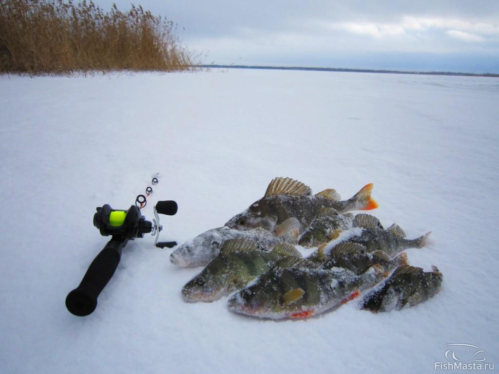 Отчеты о рыбалке на шакше