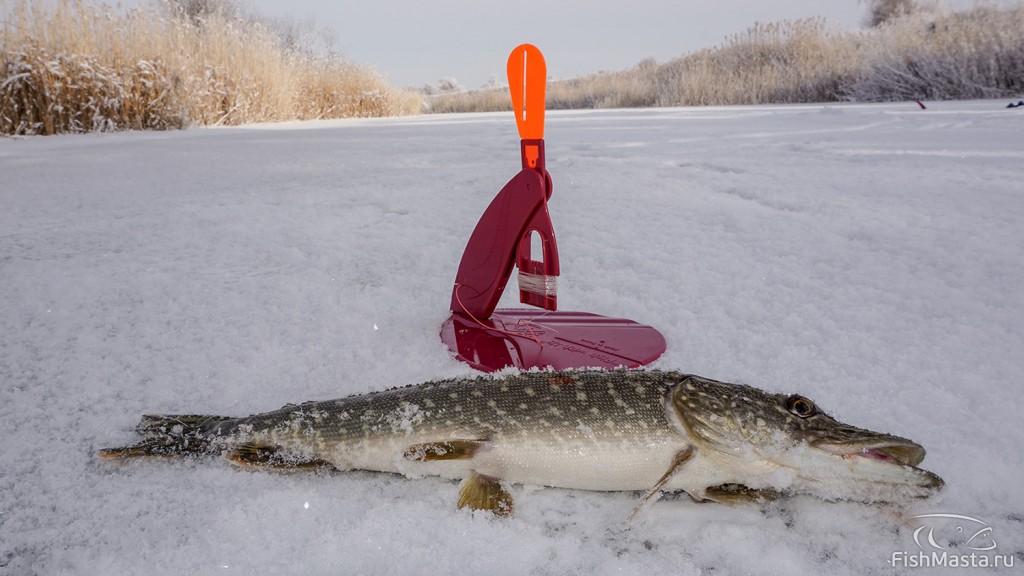 рыбалка в городе волгодонск